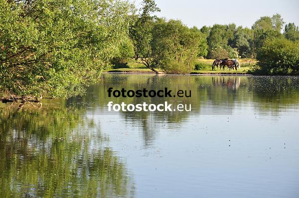 Pferde auf einer Wiese am Ufer der Nahe