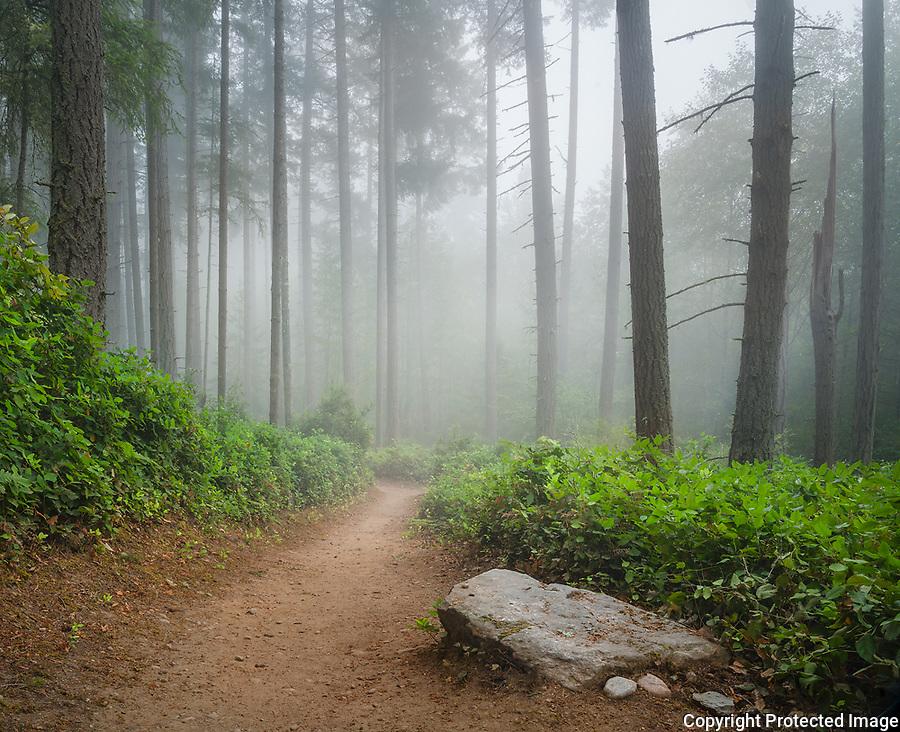 Vashon Island, Washington:<br /> Island Center Forest, Techmo trail in fog