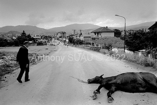 Mitrovica, Kosovo  <br /> 1999<br /> <br /> A dead horse lies in the center of the road as one enters the city of Mitrovica that the Serbs still hold. The city was empty except for the few Serbian military that mixed with French NATO troops in the city center.