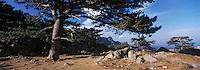 Europe/France/Corse/2A/Corse-du-Sud/Col de Bavella: Forêt et aiguilles de Bavella