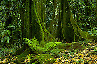 Lush greenery in the forest on Tahiti, French Polynesia. Tahiti.