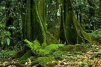 Lush greenery in the forest on Tahiti, French Polynesia. Tahiti.