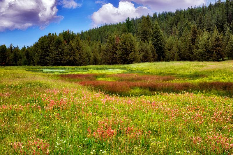 Prairie Smoke wildflowers iand pond in field near Enterprise, Oregon