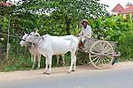 Bull Driven Cart