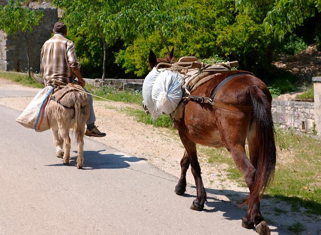 Man riding a donkey through Dol, Bra? island, Croatia
