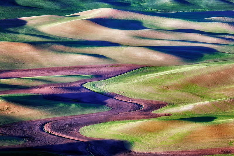 New spring wheat growth. The Palouse, near Colfax, Washington.