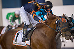 DUBAI,UNITED ARAB EMIRATES-MARCH 31: (1) Mind Your Biscuits,ridden by Joel Rosario,wins the Dubai World Cup at Meydan Racecourse on March 31,2018 in Dubai,United Arab Emirates (Photo by Michael McInally/Eclipse Sportswire/Getty Images)
