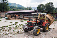 Pozzallo frazione di Romagnese (Pavia). Cooperativa Agricola Canedo: allevamento semibrado di bovini da carne. Alessandro trasporta fieno col trattore --- Pozzallo Romagnese (Pavia). Canedo Agricultural Cooperative: semi-wild breeding of beef cattle. Alessandro moving hay with the tractor