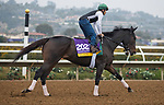 DEL MAR, CA - OCTOBER 29: Elate, owned by Claiborne Farm & Adele Dilschneider and trained by William I. Mott, exercises in preparation for Longines Breeders' Cup Distaff at Del Mar Thoroughbred Club on October 29, 2017 in Del Mar, California. (Photo by Jesse Caris/Eclipse Sportswire/Breeders Cup)