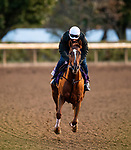 November 1, 2020: Second Of July, trained by trainer Philip A. Gleaves, exercises in preparation for the Breeders' Cup Juvenile Turf Sprint at Keeneland Racetrack in Lexington, Kentucky on November 1, 2020. Alex Evers/Eclipse Sportswire/Breeders Cup /CSM