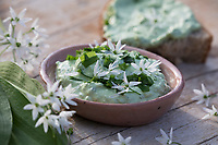 Bärlauch-Quark, Bärlauchquark, Quark mit Bärlauch, Quarkspeise, Kräuterquark, Kräuter-Quark, Bärlauch, Bär-Lauch, Allium ursinum, wild garlic, Ramsons, Wood Garlic, Wood-Garlic, ramsons, buckrams, broad-leaved garlic, curd, curds, Quark, quarg, Herbal quark, quark with herbs, herb curd, L'ail des ours, ail sauvage