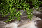 Spring rains turn a brook into a torrent in Gatlinburg, TN, USA