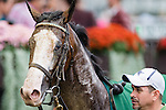 ELMONT, NY - OCTOBER 08: South Sea #2, after winning the Winthrop University Hospital's Breast Health Center Race, on Jockey Club Gold Cup Day at Belmont Park on October 8, 2016 in Elmont, New York. (Photo by Douglas DeFelice/Eclipse Sportswire/Getty Images)