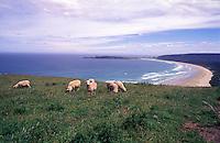 New Zealand,  December 1994  ..New Zealand Catlins..Photo Kees Metselaar