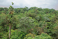 Rainforest at San Jorge Eco-Lodge, Milpe, Ecuador