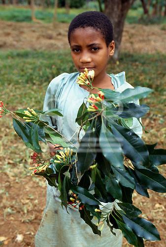 Zanzibar, Tanzania. Clove flowers (Eugenia Caryophyllus).