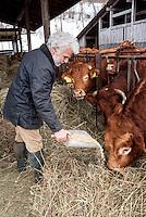Pozzallo frazione di Romagnese (Pavia). Cooperativa Agricola Canedo: allevamento semibrado di bovini da carne. Franco nutre le mucche --- Pozzallo Romagnese (Pavia). Canedo Agricultural Cooperative: semi-wild breeding of beef cattle. Franco feeding the cows
