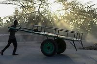 KENYA , Turkana, Lodwar, transport with hand-pulled wagon / KENIA Turkana, Lodwar, Transport mit Handkarren