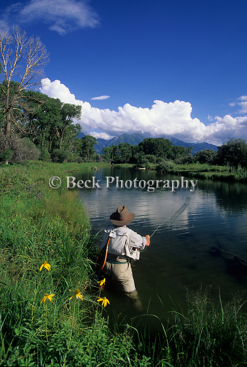 Fly fishing on Depuy's Spring Creek, side slough, Paradise Valley, Montana.