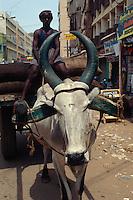 Ochsenwagen in Madurai, Tamil Nadu, Indien