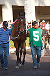 Little Mike in the saddling padock before winning the Florida Sunshine Millions Fillies Turf at Gulfstream Park. Hallandale Beach, Florida. 01-28-2012