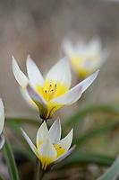 Phoenix Perennials - February