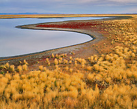 Wild bunchgrass and whorled dock line The Narrows in Malheur National Wildlife Refuge in Harney County, Oregon