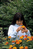 HS18-098z  Girl picking marigold flowers - Tagetes spp.