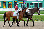 February 21, 2015: Dreams Cut Short with Miguel Mena up in the Fairgrounds Handicap at the New Orleans Fairgrounds Risen Star Stakes Day. Steve Dalmado/ESW/CSM