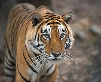 India 2015 Wildlife