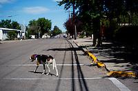 A dog walks along a street in Cut Bank, Montana, USA.