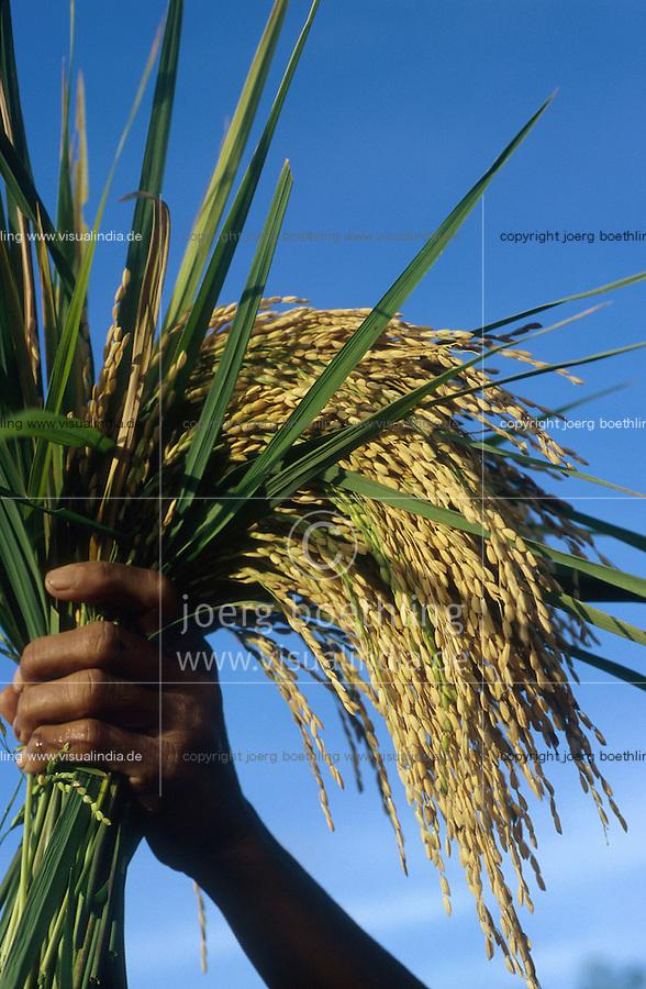 PHILIPPINES, Negros, NGO BIND promotes organic rice farming after SRI method, system of rice intensification, paddy harvest at farm of woman farmer Emilia Dalisay in village Sitio Sutay / PHILIPPINEN Negros, NGO BIND foerdert den oekologischen  Reisanbau nach dem SRI System, System zur Reisintensivierung, <br /> Reisernte bei Kleinbaeuerin Frau Emilia Dalisay 45 Jahre im Dorf Sitio Sutay