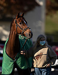 November 3, 2020: Channel Maker, trained by trainer William I. Mott, exercises in preparation for the Breeders' Cup Turf at Keeneland Racetrack in Lexington, Kentucky on November 3, 2020. Carolyn Simancik/Eclipse Sportswire/Breeders Cup