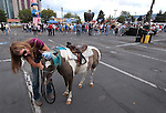 Barbar Hughes, with Borges Horse Rides, gets Gizmo ready for rides at an Americans for Prosperity rally in Reno, Nev., on Monday, July 23, 2012..Photo by Cathleen Allison