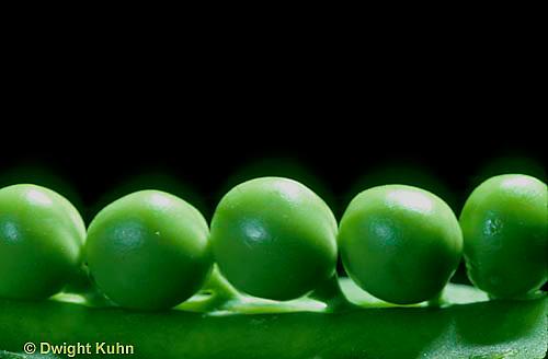 HS26-017z   Pea - peas in pod - Green Arrow variety