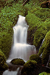 Small waterfall in forest setting with moss covered rocks .