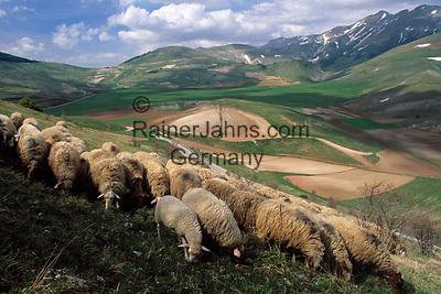 Italien, Umbrien, Schafherde auf einer Hochebene in den Sibillinischen Bergen| Italy, Umbria, tableland at the Sibillini mountains - sheep