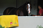 Scenes from morning workouts for the Kentucky Derby and Kentucky Oaks at Churchill Downs in Louisville, Kentucky on May 3, 2012. .