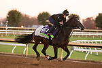 Kameko, trained by trainer Andrew M. Balding, exercises in preparation for the Breeders' Cup Mile at Keeneland Racetrack in Lexington, Kentucky on November 4, 2020.