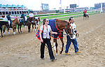 Animal Kingdom is led to the paddock before winning the 137th running of the Kentucky Derby at Churchill Downs in Louisville, Kentucky on May 7, 2011.