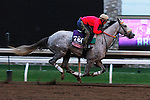 October 26, 2015: Tap To It, trained by Ralph Nicks, and owned by Whisper Hill Farm, is entered in the Breeder's Cup 14 Hands Winery Juvenile Fillies. Candice Chavez/ESW/CSM