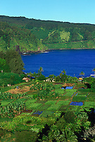 Aerial of Keane penisula with taro farms, Maui