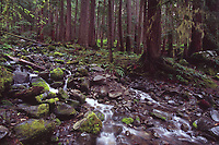 Rainforest Stream in Sol Duc River Valley, Olympic National Park, Washington, US