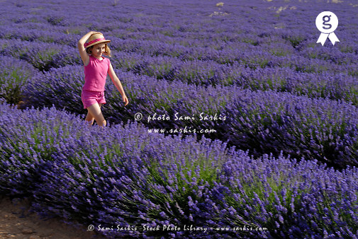 Girl (6-7) walking in lavender fields - Plateau de Valensole, Provence, France (Licence this image exclusively with Getty: http://www.gettyimages.com/detail/sb10061763ff-001 )
