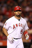 Albert Pujols #5 of the Los Angeles Angels runs the bases against the Texas Rangers at Angel Stadium on June 2, 2012 in Anaheim,California. Los Angeles defeated Texas 3-2.(Larry Goren/Four Seam Images)