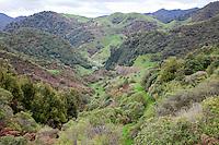 Waioeka Gorge, Views from Highway 2, between Opotiki and Gisborne, north island, New Zealand.