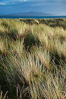 Dune grass, Berneray, Outer Hebrides, Scotland