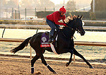 Stacelita , trained by Chad Brown and to be ridden by Ramon Dominguez , exercises in preparation for the 2011 Breeders' Cup at Churchill Downs on.October 30, 2011.