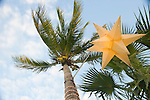 Palm Tree with a Star