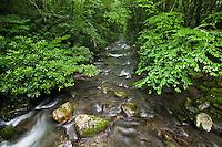Oconaluftee River in spring